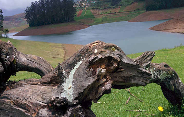 South India Hill Station tour packages|Ooty, Munnar ...